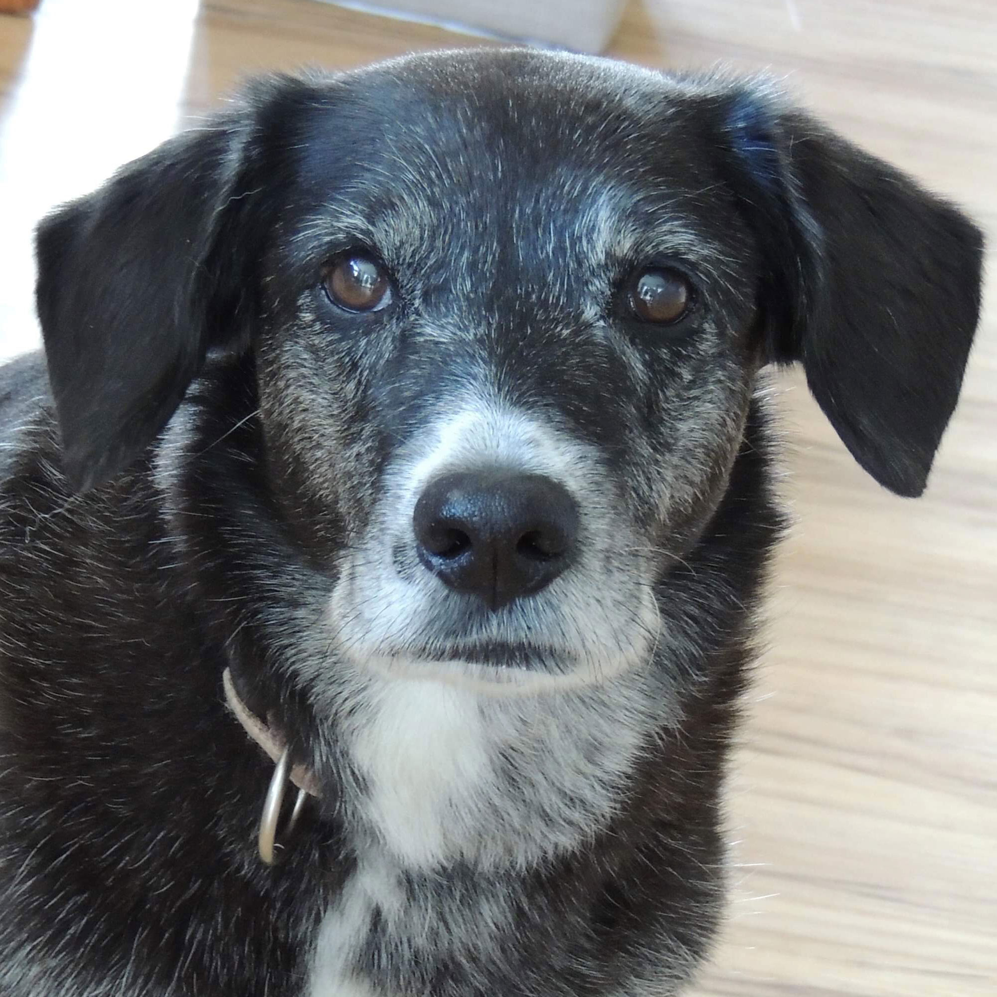 photo-chien-lady-zootherapie-daniele-monast