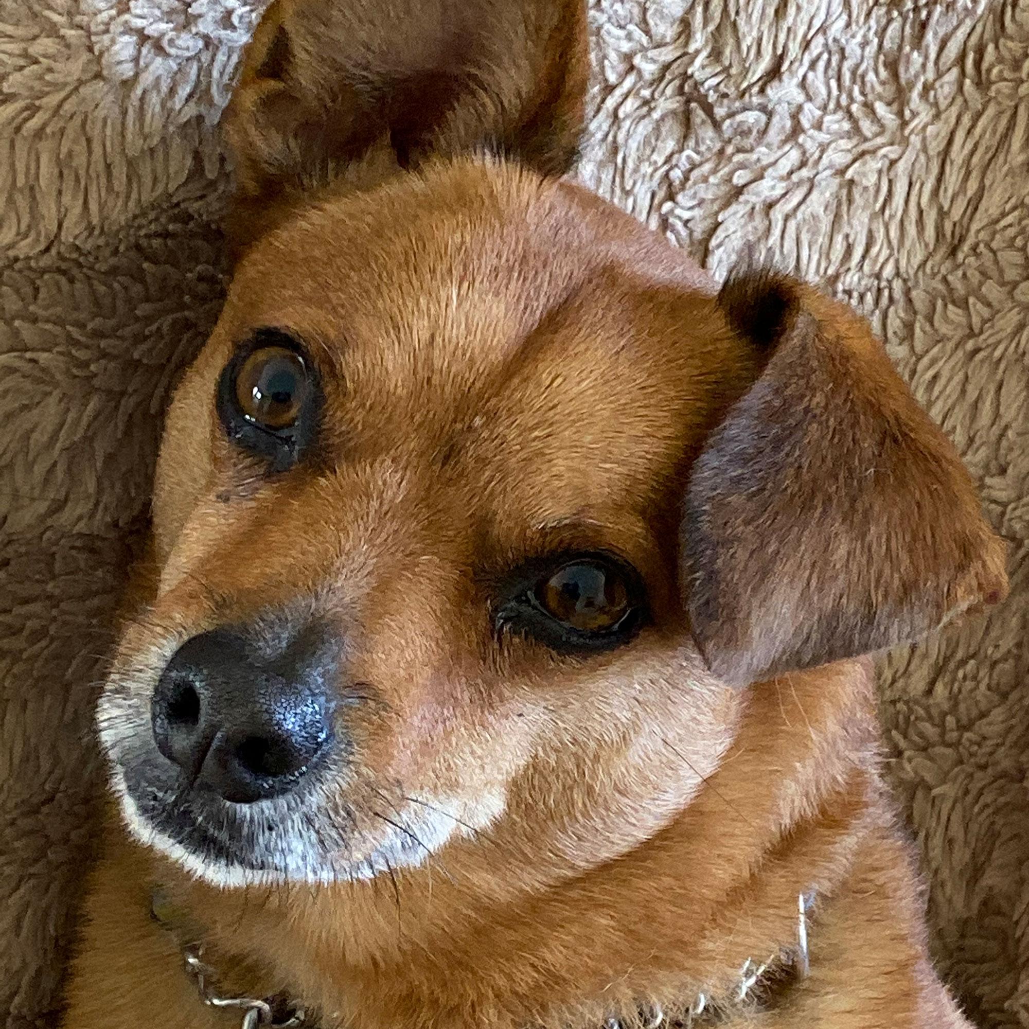 photo-chien-toxon-zootherapie-daniele-monast